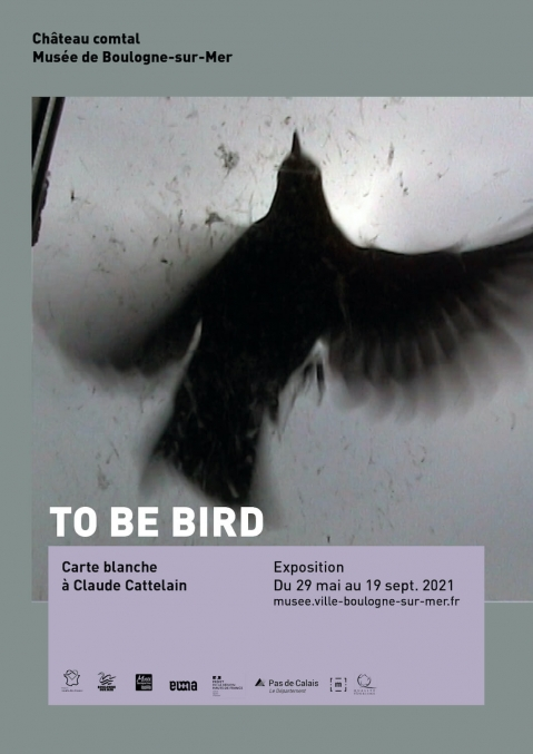 Exposition - To be bird