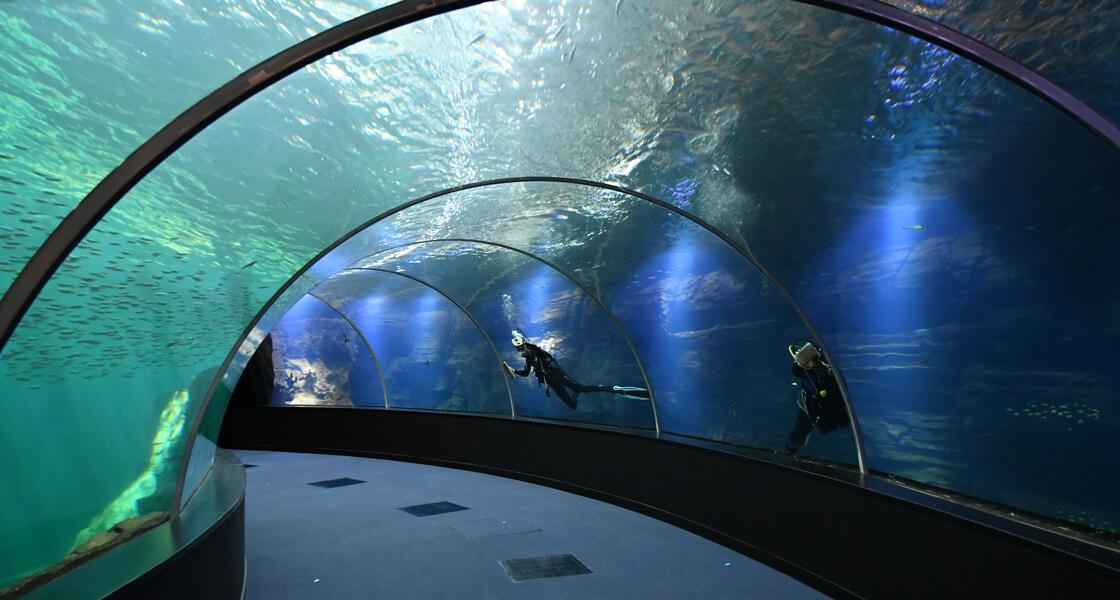 Grand nausica embarquez pour un voyage en mer inconnue for Piscine de boulogne billancourt tarif